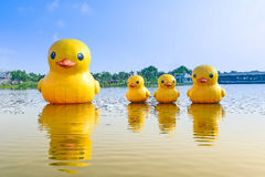Anatra di gomma di galleggiamento in lago Fotografia Stock