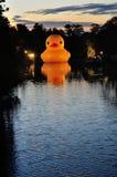Anatra di gomma nel fiume di Parramatta Fotografia Stock Libera da Diritti