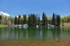 Anatra e lago dog Fotografia Stock Libera da Diritti