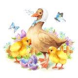 Anatra e pollo felici della cartolina d'auguri di Pasqua Fotografia Stock Libera da Diritti