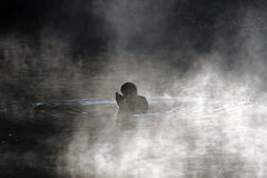 Anatra nella nebbia Fotografia Stock
