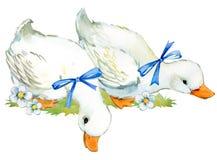 Anatra sveglia illustrazione domestica dell'acquerello dell'uccello dell'azienda agricola Immagine Stock
