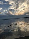 Anatre che nuotano sotto le nuvole Fotografie Stock