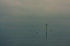 Anatre che nuotano vicino al cartello sulla mattina nebbiosa Immagini Stock