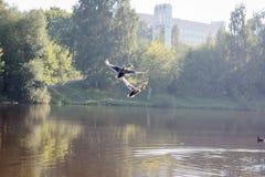 Anatre che volano sotto l'acqua del lago Fotografia Stock Libera da Diritti