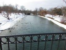 Anatre del fiume Immagini Stock