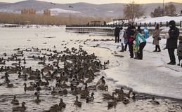 Anatre dell'alimentazione della gente sul fiume immagine stock libera da diritti
