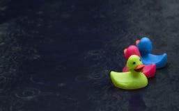 Anatre di gomma in tempesta di pioggia Fotografia Stock Libera da Diritti