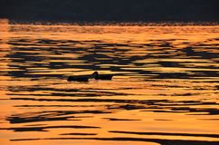 anatre e fiume al tramonto Fotografie Stock