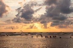 Anatre e gabbiani al tramonto drammatico con le nuvole pesanti su Balti Immagini Stock Libere da Diritti