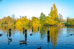 Anatre ed uccelli a Hyde Park, Londra Immagini Stock Libere da Diritti
