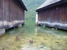 Anatre fra le costruzioni di legno al konigsee del lago Fotografia Stock Libera da Diritti