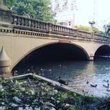 anatre nel fiume Fotografia Stock Libera da Diritti