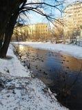 Anatre sul fiume nel parco della città fotografie stock