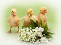 Anatroccoli di Pasqua Fotografie Stock