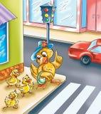 Anatroccoli divertenti che attraversano la strada Fotografie Stock
