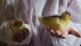 Anatroccolo neonato della tenuta della donna ed il suo uovo in palme video d archivio