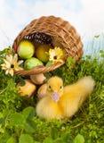 Anatroccolo sveglio con le uova di Pasqua fotografia stock