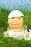 Anatroccolo in un uovo Immagini Stock