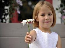 Anbietengänseblümchen des recht jungen Mädchens Lizenzfreies Stockfoto