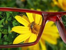 Anblick auf der Blume Stockbilder