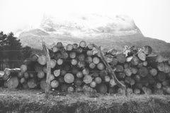 Anboto detrás de algunos troncos cubiertos en nieve Foto de archivo