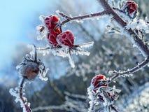 Anca congelata Fotografia Stock