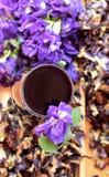 Anchan kwiatów woda i świezi anchan kwiaty purpurowi Obrazy Royalty Free