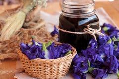 Anchan kwiecenia woda i świezi anchan kwiaty purpurowi Obraz Stock