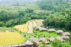 Anche giacimenti e località di soggiorno irrigati sviluppati del riso Immagini Stock Libere da Diritti