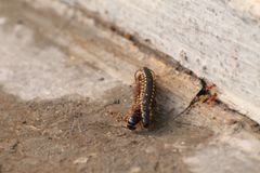 Anche gli insetti sono coppie immagine stock