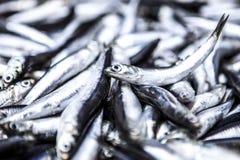 Anchioves pescato fresco al mercato ittico Fotografia Stock
