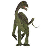 Anchisaurus Jurassic Dinosaur. Anchisaurus was a omnivorous prosauropod dinosaur that lived in the Jurassic Periods of North America, Europe and Africa Royalty Free Stock Photos