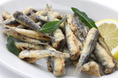 Anchois cuits à la friteuse Photo stock