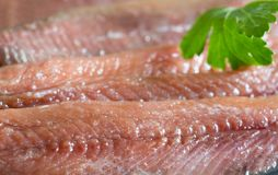 Anchois fisch fillet in oil closeup. Macro royalty free stock image