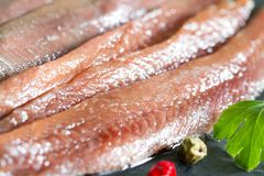 Anchois fisch fillet in oil closeup. Macro royalty free stock photo