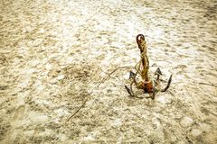 Anchor in the sand Royalty Free Stock Photos