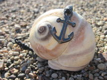 Anchor on Sea Shell Royalty Free Stock Photos