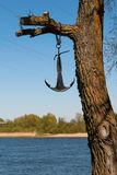 Anchor. An anchor on a tree branch, rusne island, lithuania Stock Image