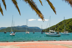 Anchored yachts in Picton, New Zealand Stock Image