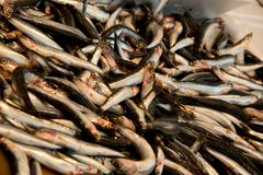 Anchovas frescas no mercado de peixes Foto de Stock Royalty Free