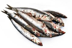 Anchovies. Stacked side by side surrounded by white background Royalty Free Stock Photo