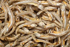 Anchovies Royalty Free Stock Images