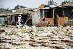 Anchovies drying for fish sauce production in Mui Ne factory, Vietnam Royalty Free Stock Image