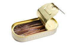 Anchovies fillets in tin can Stock Image