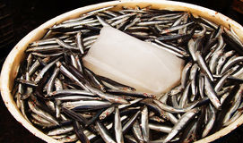 Anchovies at the fish market. On the streets of Naples , Italy Royalty Free Stock Images