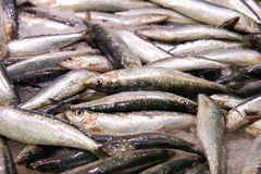 Anchovies Royalty Free Stock Image