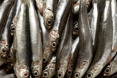 Anchovies fish Stock Photography
