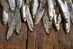 Anchovies fish on wooden table. Salted anchovies fish on wooden table Royalty Free Stock Image