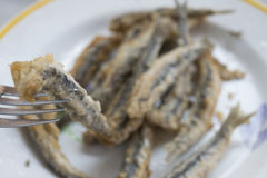 Anchovies floured and fried Stock Photography
